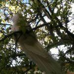 Май 2013. В Вальдштейнском саду