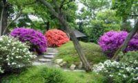 botanich_sad_2