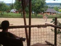 2_safari_v_chehii_1