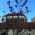 Май 2013. Во Франтишковом саду