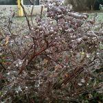 1 дек 2014. Первый день зимы